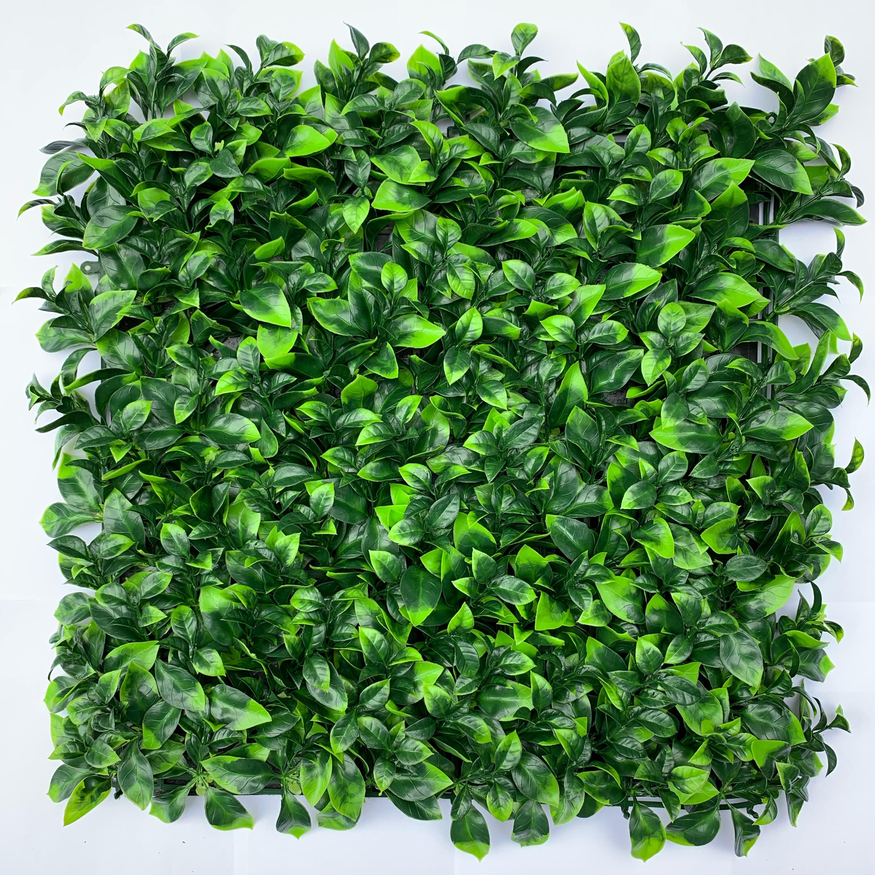 Con hojas finas-medianas, que presentan tonalidades claras y verde vida.  Este follaje es ideal para espacios en donde se requiera dar una apariencia tersa y homogenea.  Ideal para espacios de interior y exterior.